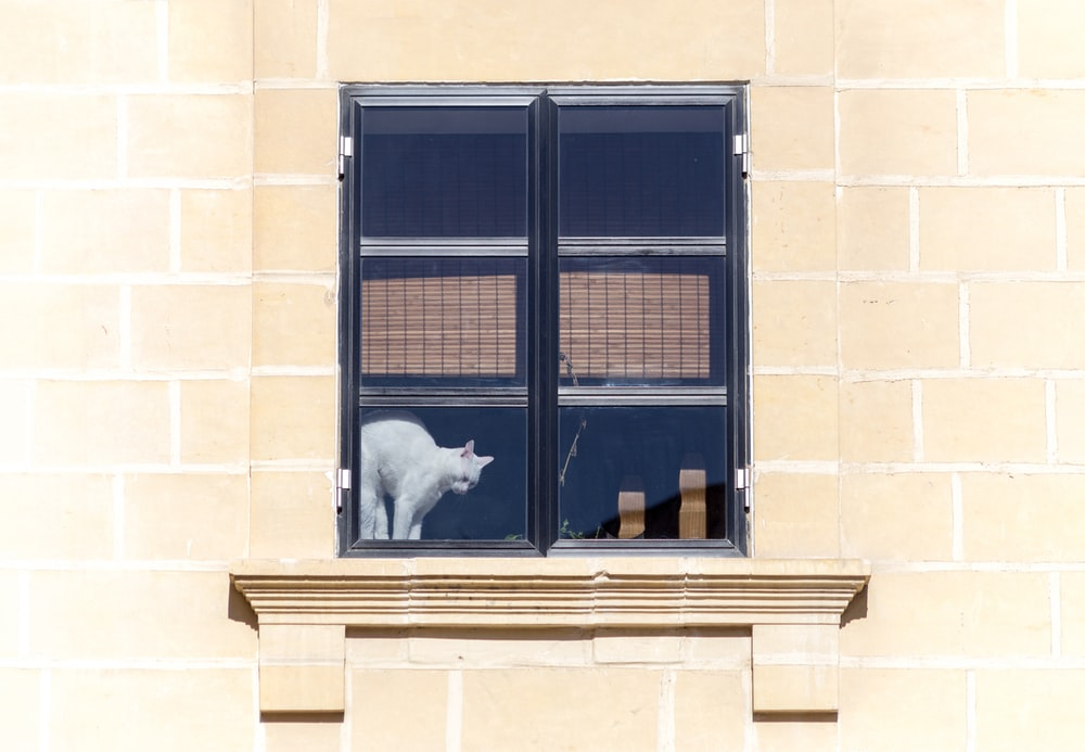 white cat on the window photography
