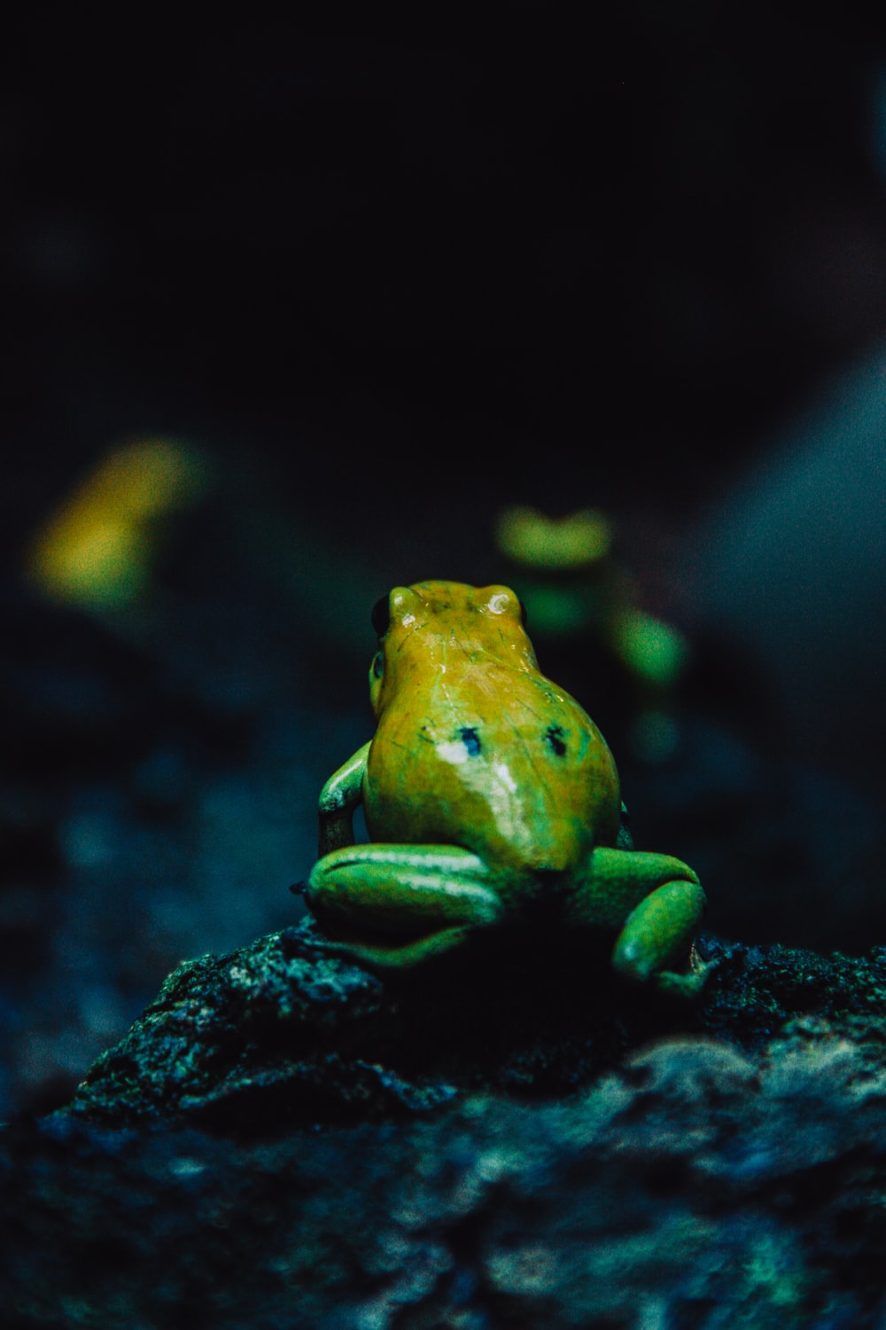 green and yellow frog on gray rock