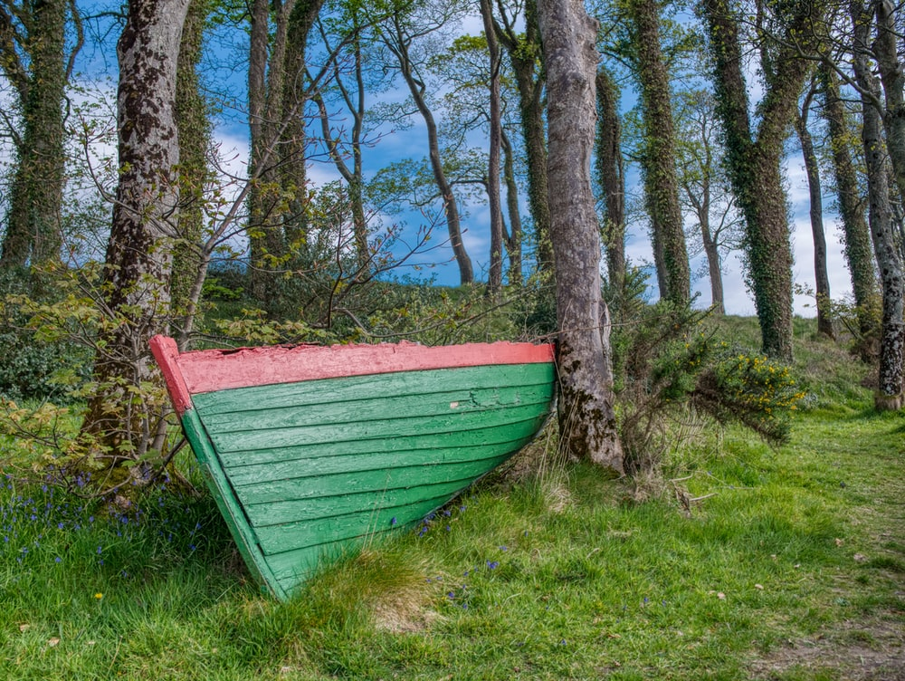 green and red wooden boat surrounded with tall and green trees