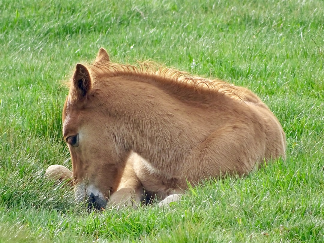 Beautiful foal At Stanpit Marsh Christchurch. Just relaxing in the long grass of a beautiful spring morning. I stood for ages watching the false either resting or playing happily. This photo makes me smile and feel happy.
