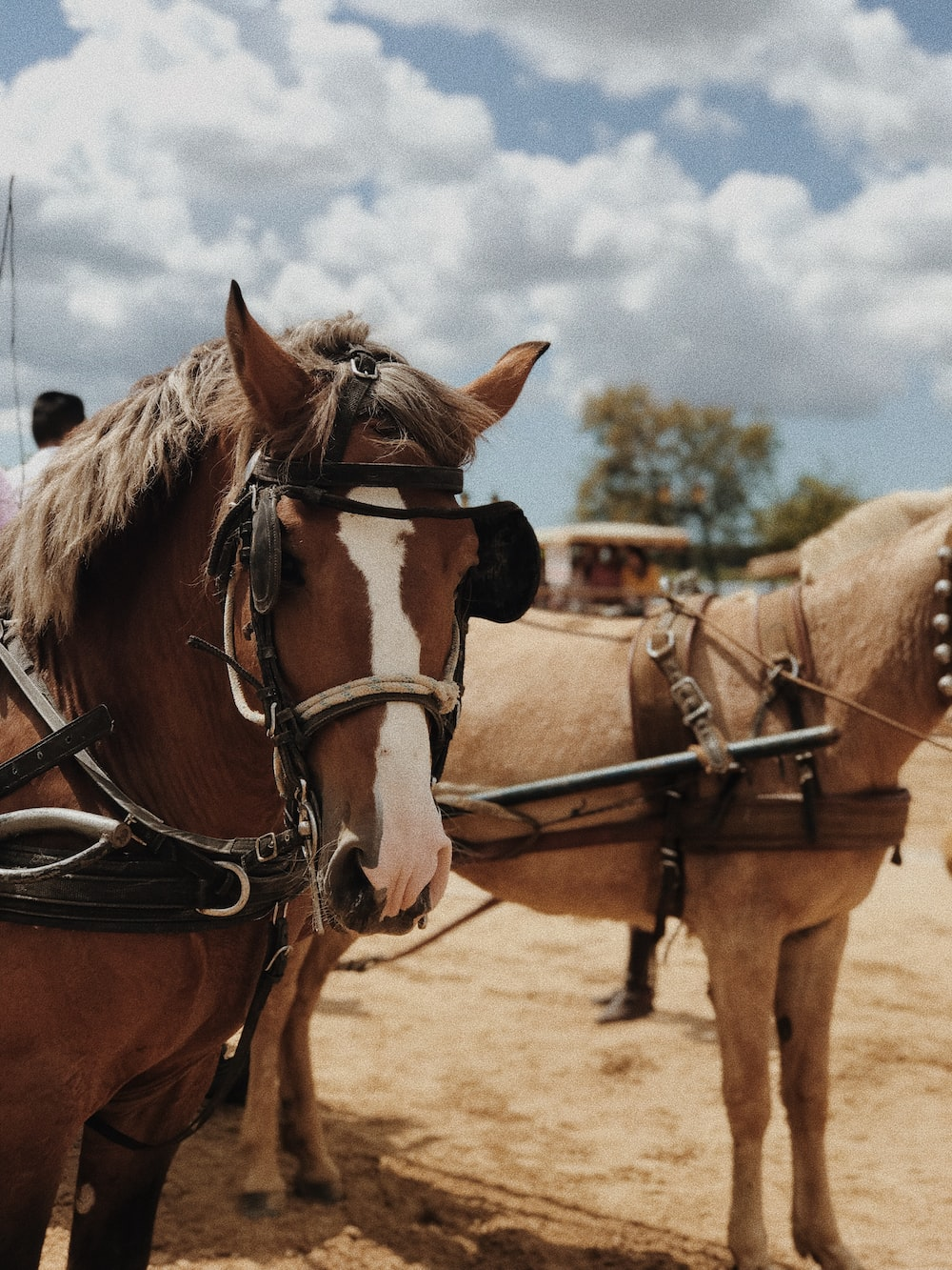 selective focus photo of two beige and brown horses
