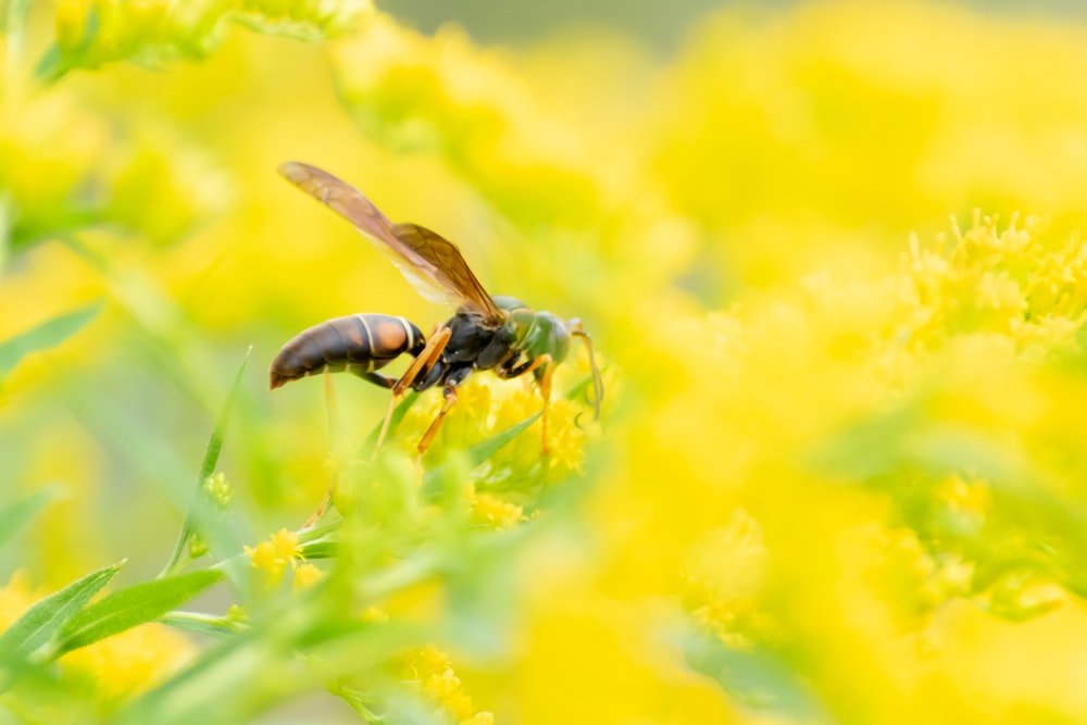 black and brown hornet perched on yellow flower