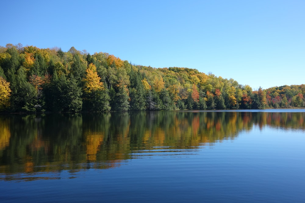trees on calm body of water under clear blue sky at daytime