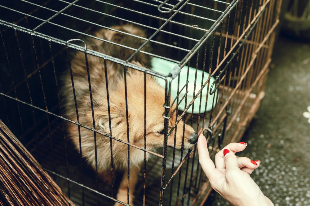 person beside cage with brown dog