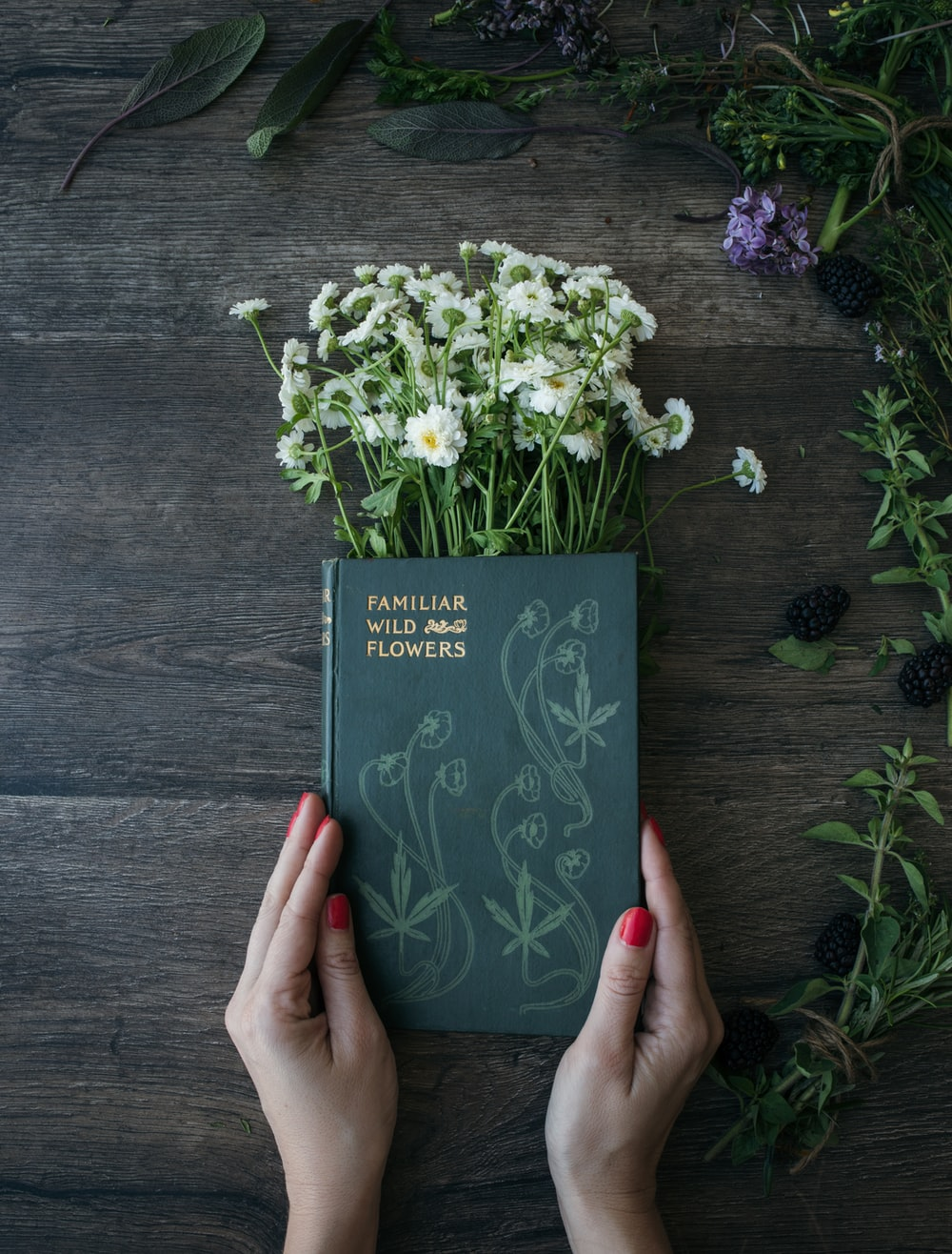 woman holds Familiar Wild and Flowers book on common daisies on brown panel