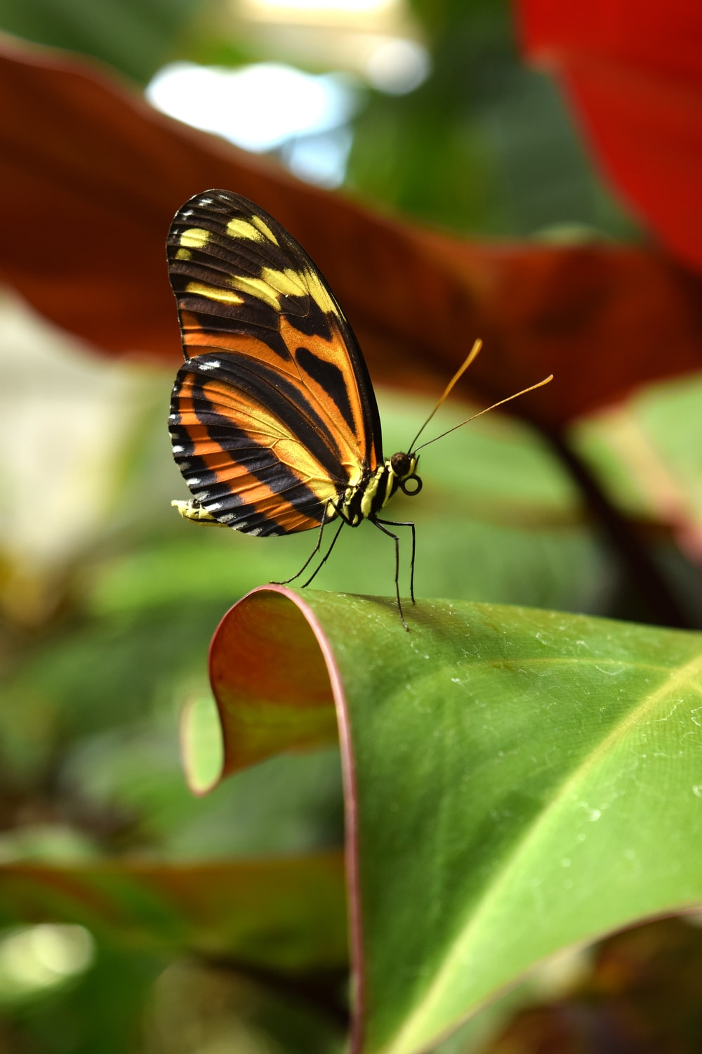 black, yellow, and orange butterfly on green leaf