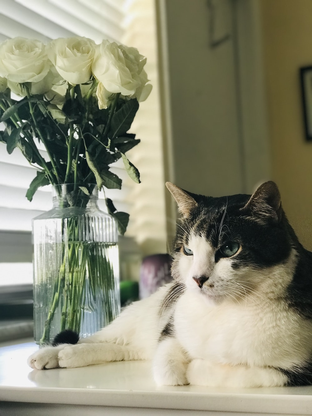 black tabby and white cat lying on white surface beside glass vase and window with Venetian blinds