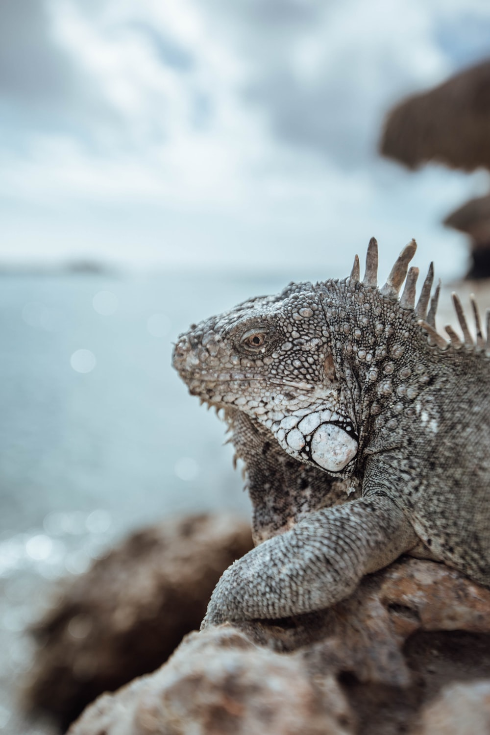 selective focus photo of brown and gray bearded dragon