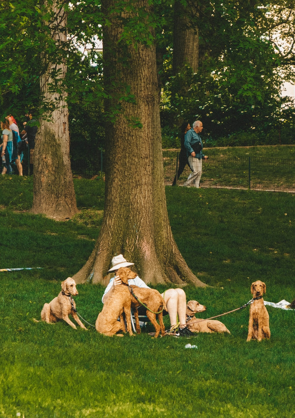 person sitting on grass surrounded by dogs