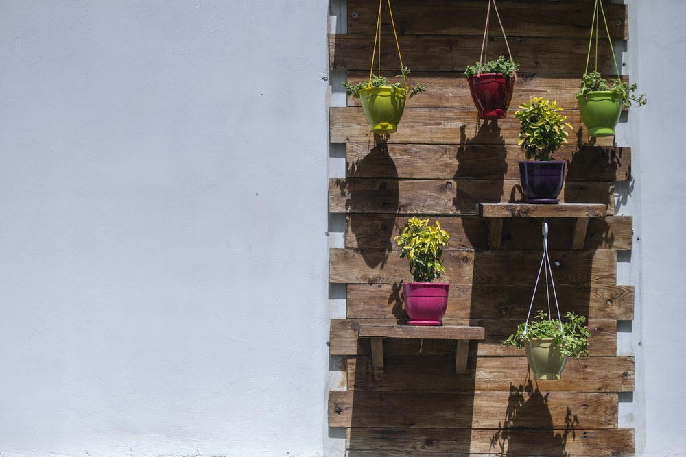 assorted hanged plants