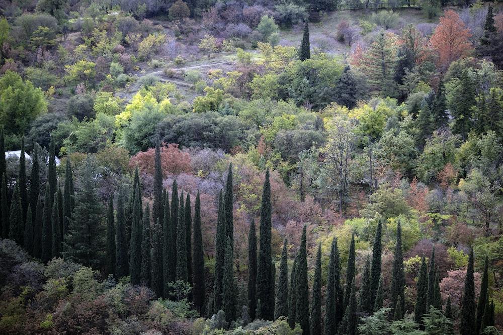 green tree lot