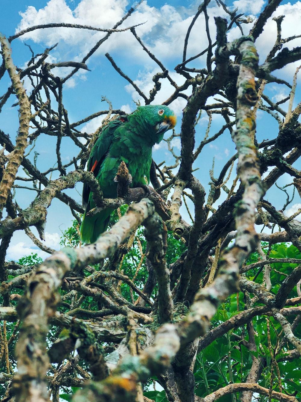 green parrot preaching tree