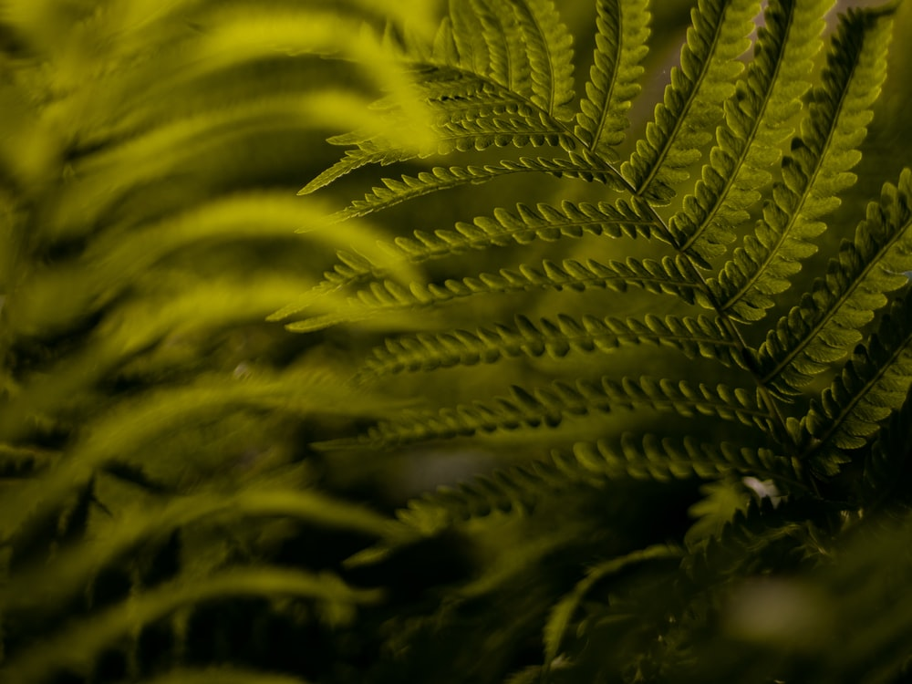 green fern close-up photography