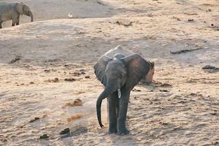 conservation of elephants