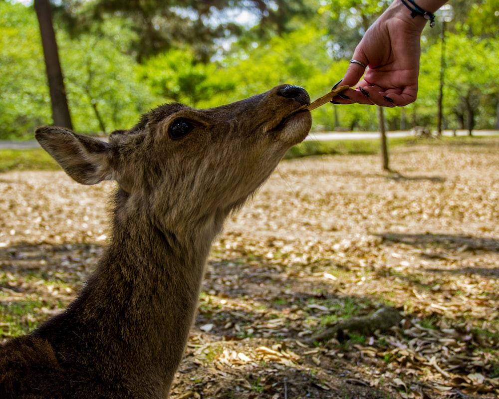 person feeding deer during daytime