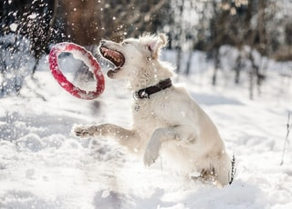 dog about to catch red ring