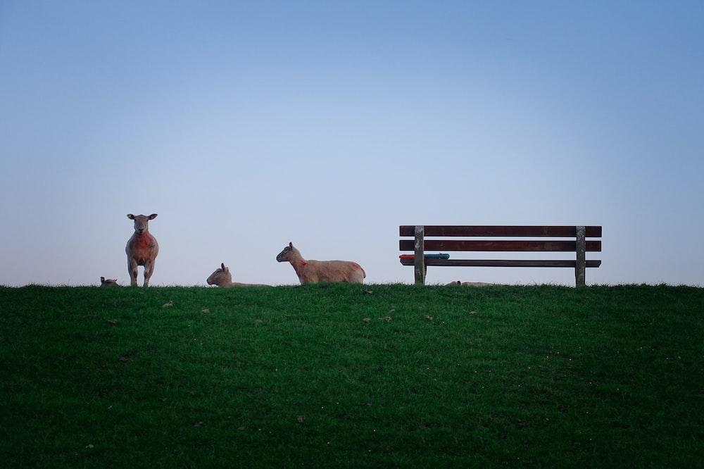 brown animals near bench