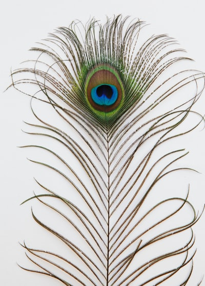 green peacock feather