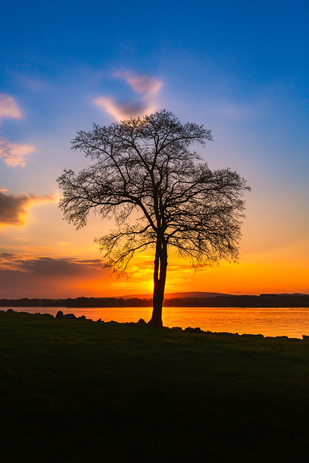 bare tree near body of water