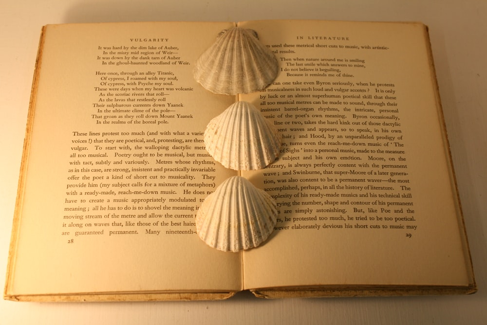 three white seashells on open book
