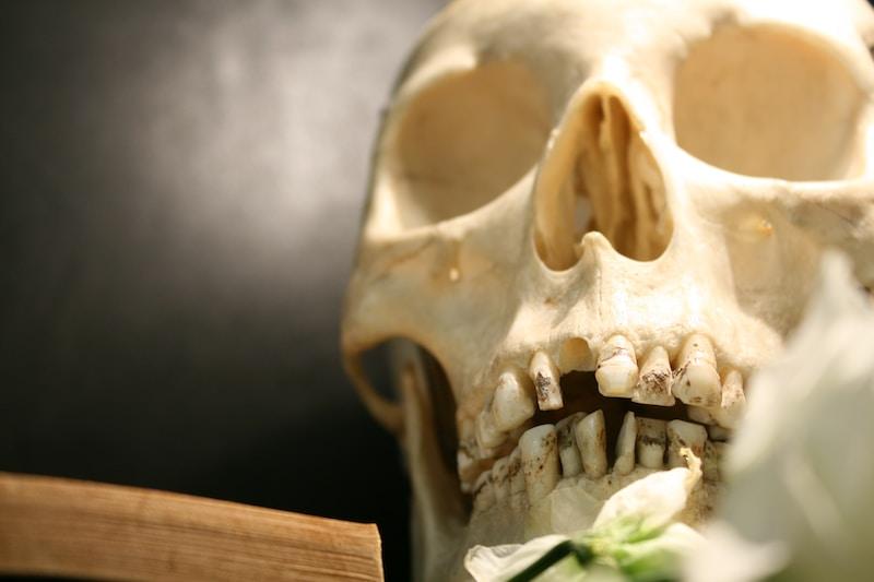 human skull close-up photography
