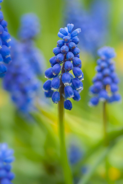 blue flowered plant