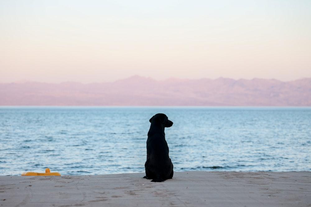black dog on seashore looking at ocean during daytime