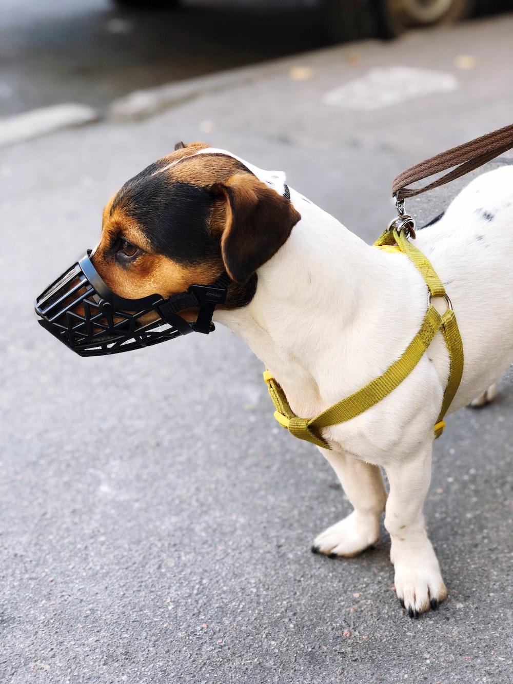 dog wearing muzzle