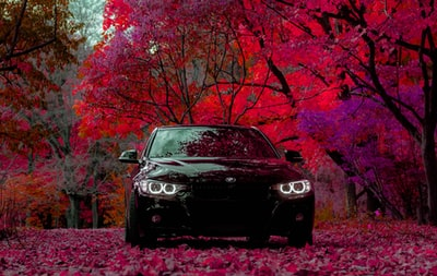 black car surrounded with maroon leaf trees automobile teams background