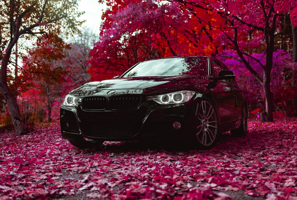 black BMW sedan parked near red tree
