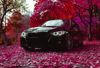 black bmw sedan parked near red tree vehicle zoom background