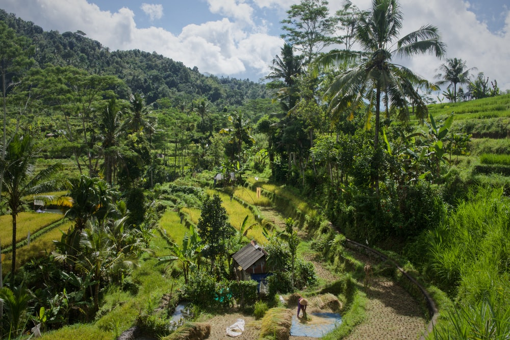 trees growing on rice terraces during daytime