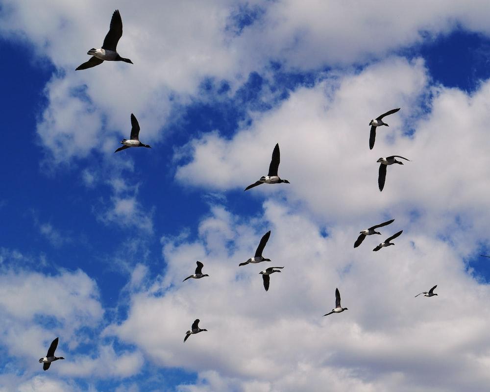 flock of flying bird during daytime