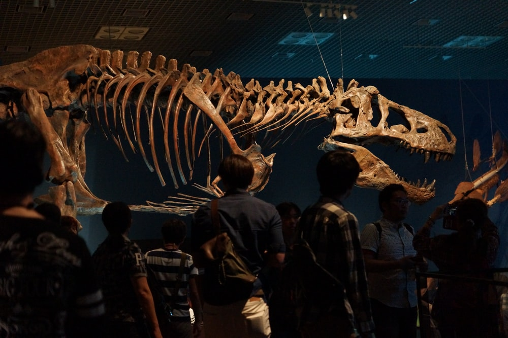 people looking at dinosaur skeleton