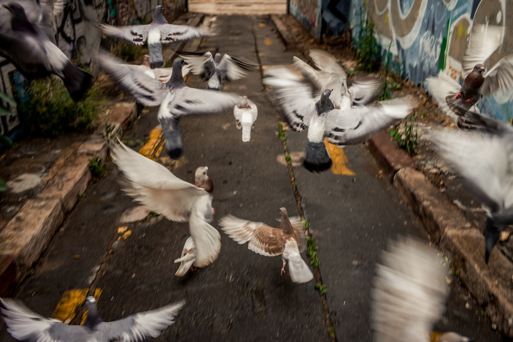 flock of pigeons flying on alley