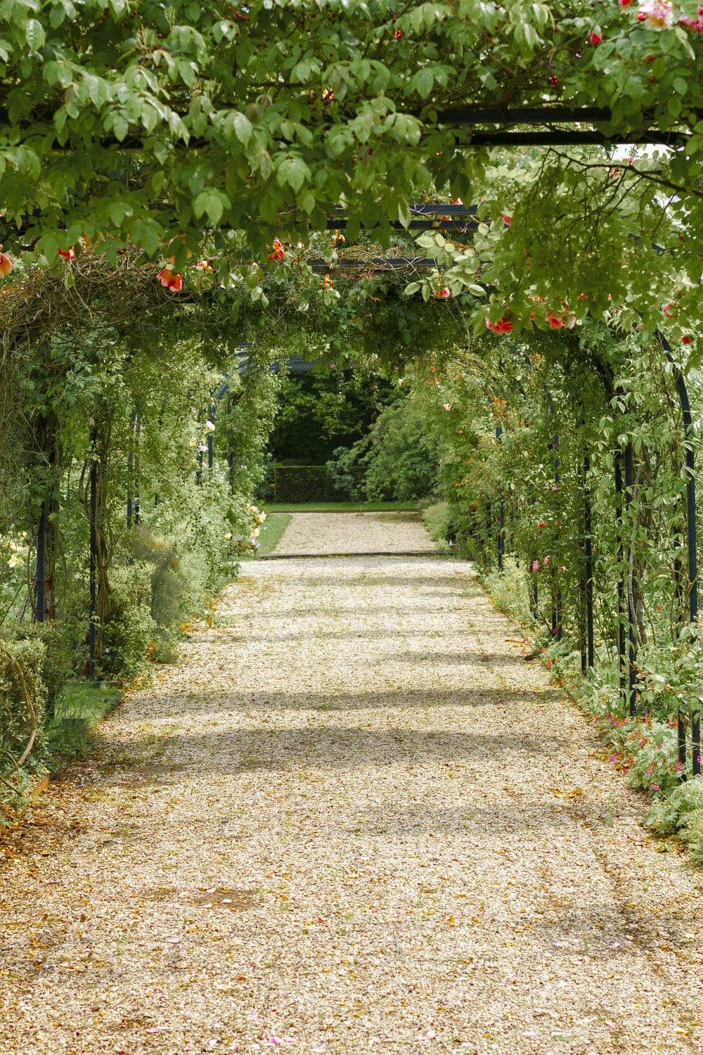 concrete pathway in flower garden with no people