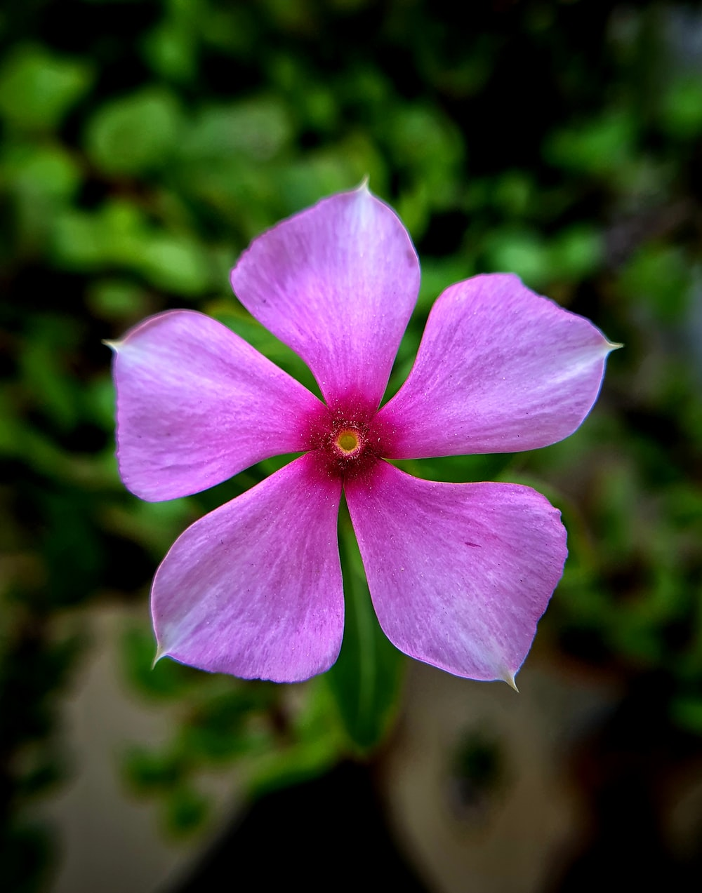 selective focus photography of 5-petaled flower