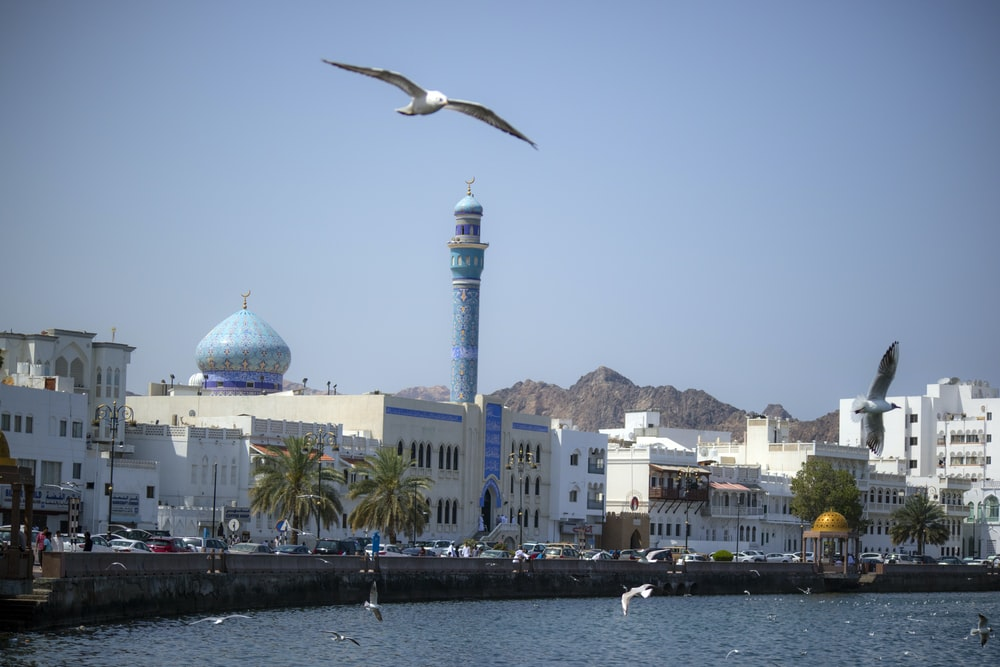 photography of seaguls flying over body of water beside white buildings during daytime