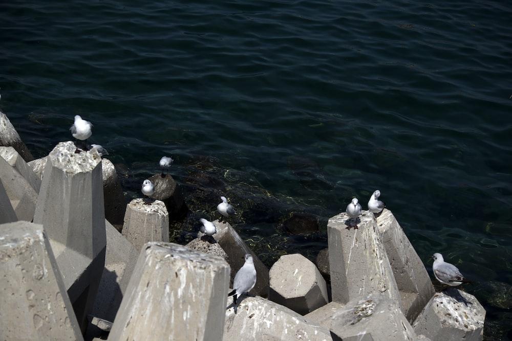birds on concrete rocks