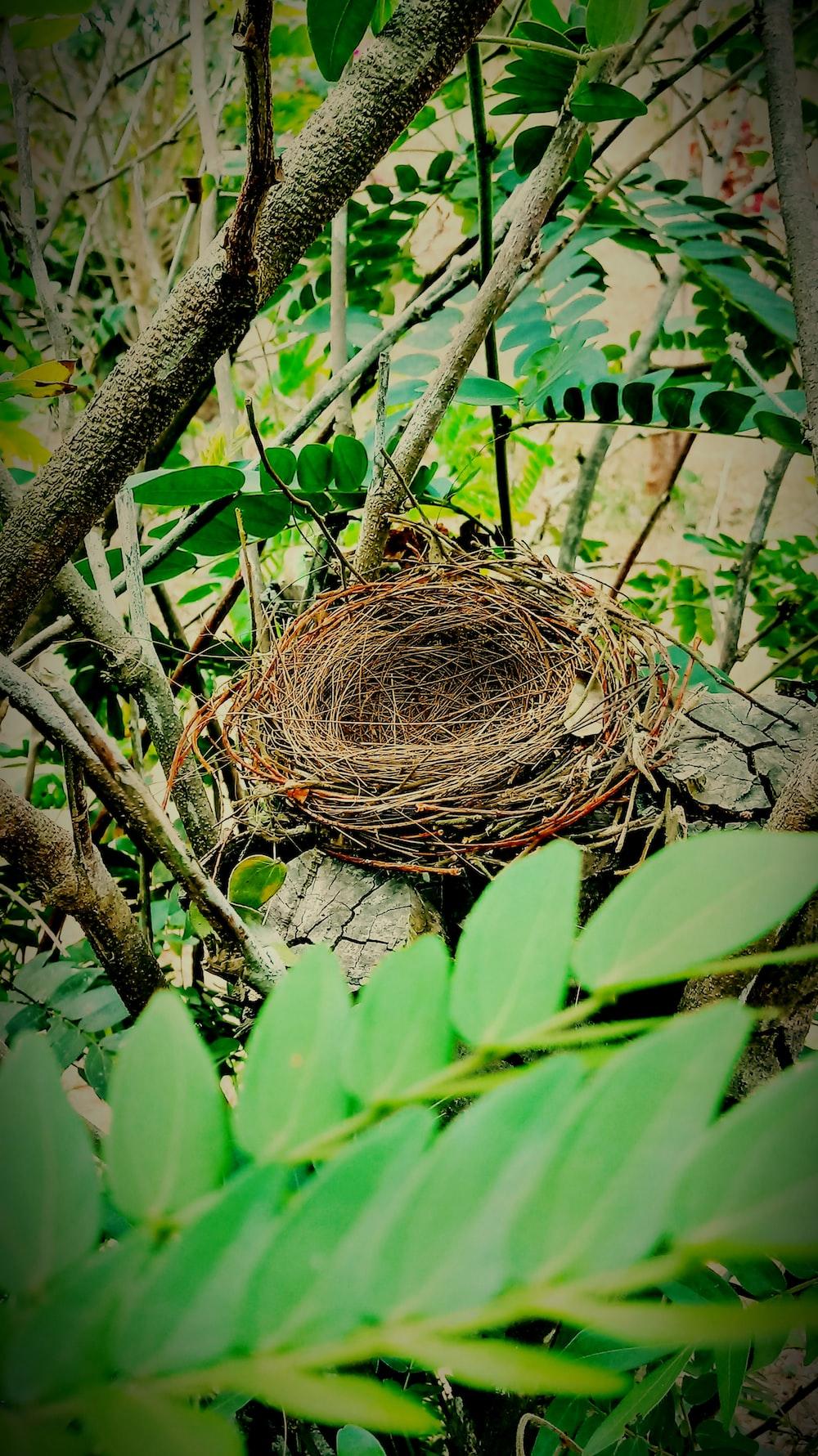 brown nest on tree