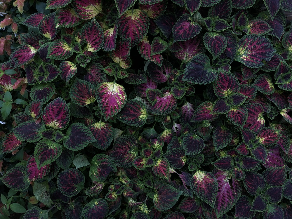green and purple plants