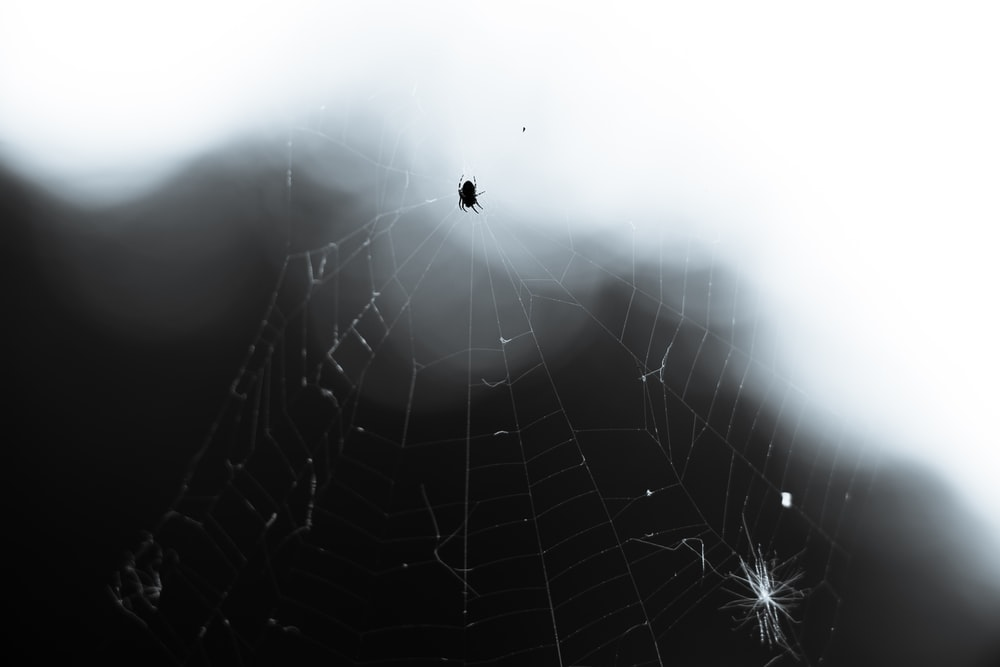black spider in spiderweb