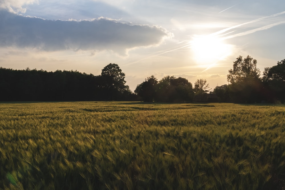 photography of green grass field during sunset