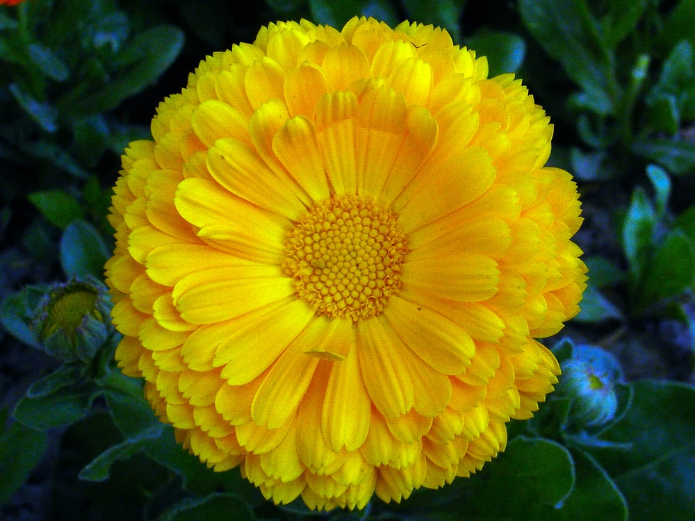 close-up photography of yellow flower