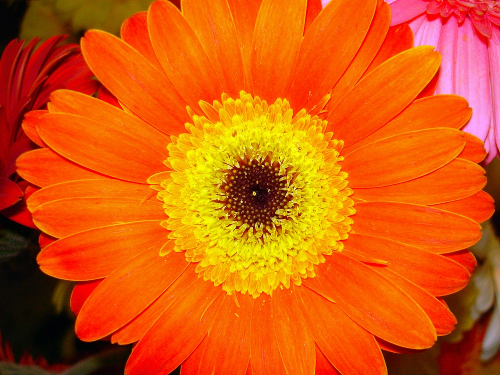 closeup photo of orange petaled flower