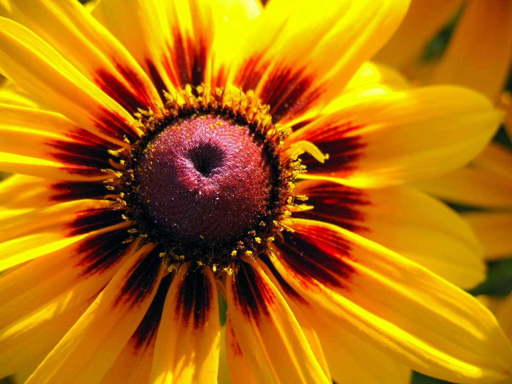 micro photography of yellow flower