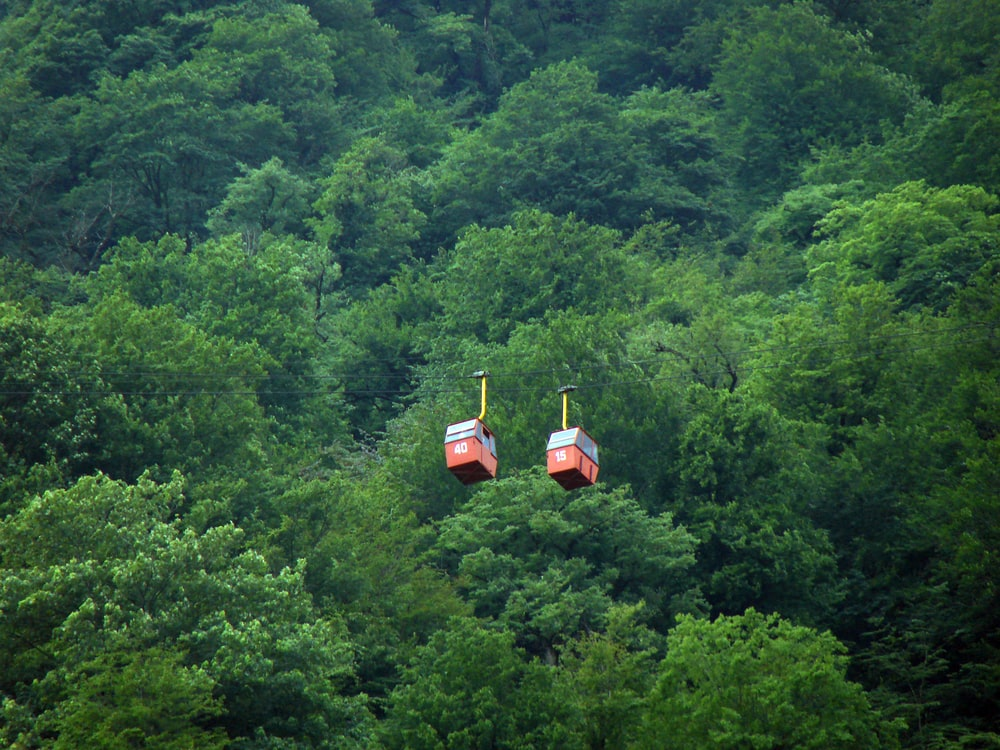 red-and-gray cable cars over green trees