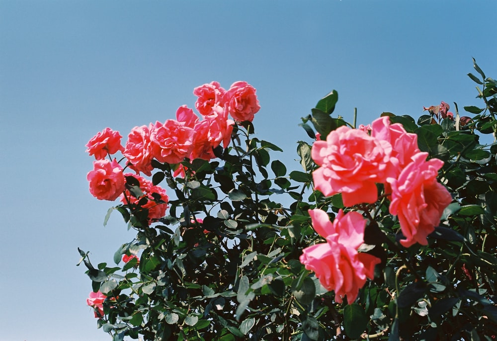 red petaled flower bloom during daytime