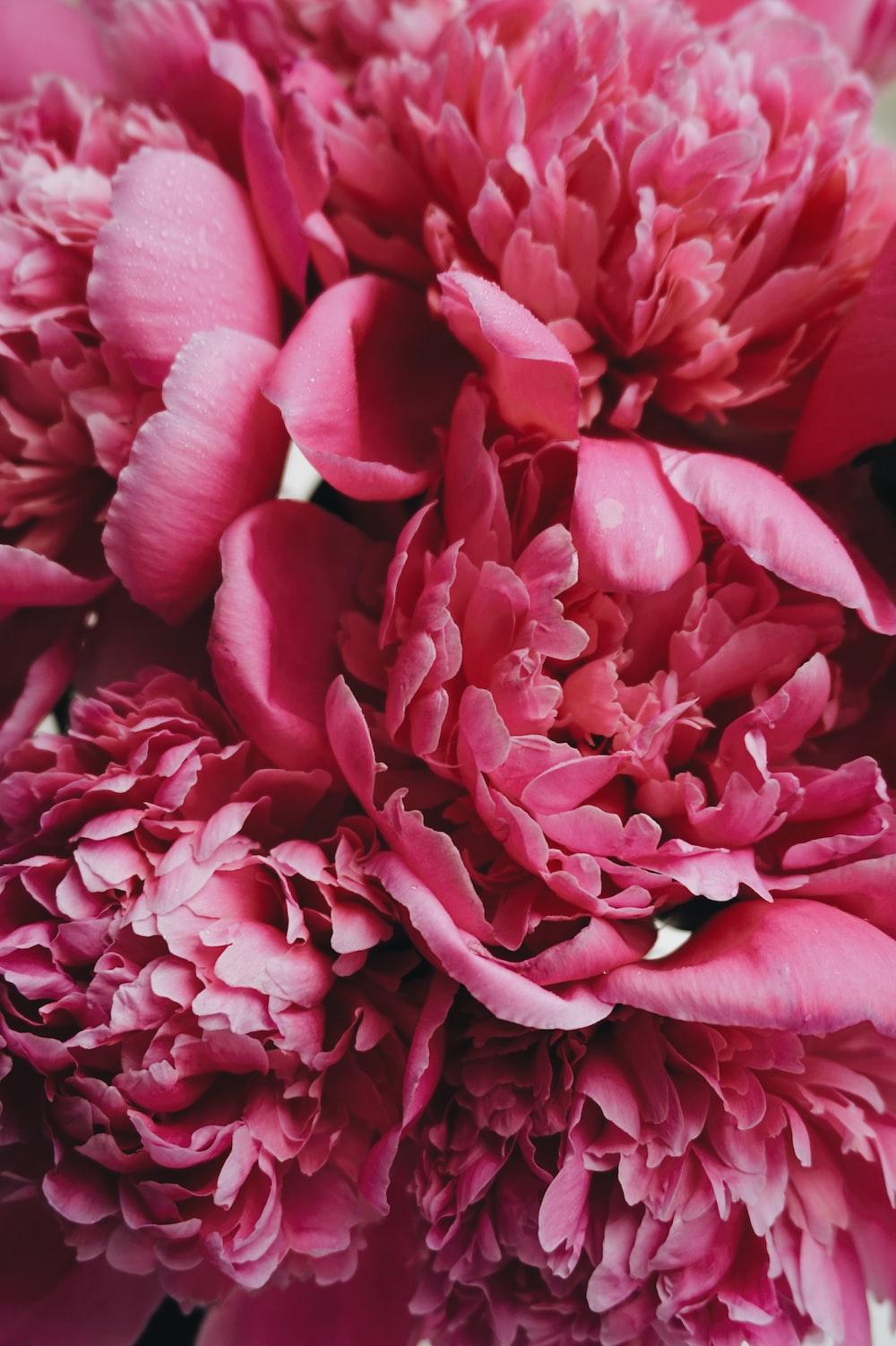 pink-clustered petal flower