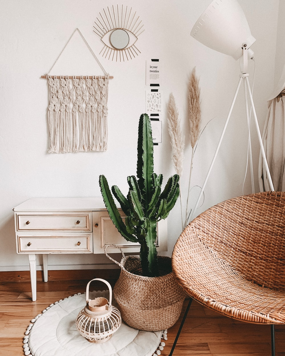 green cactus plant in room